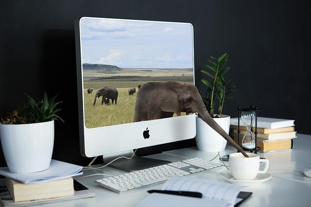 slon z monitoru
